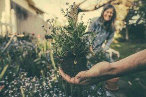 Trasplantar plantas en casa